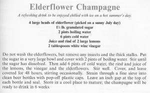 UK - Hampshire - Elderflower Champagne