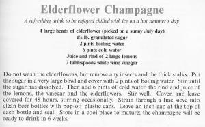 UK - Hampshire - Elderflower Champagne
