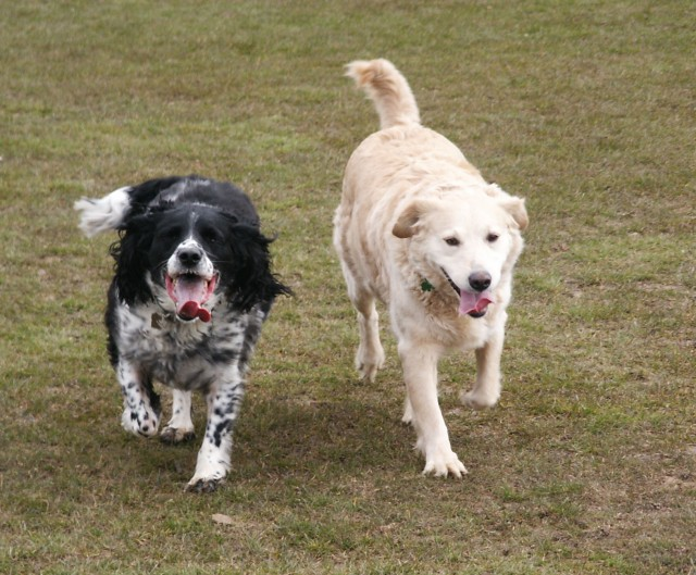 Sammy & Alice running free
