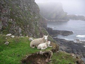 Mountain Goats, Scottish Coast