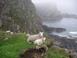 Mountain Goats, Scottish Coast